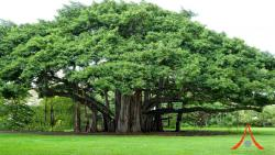 Banyan tree meditation